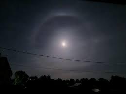 Факторы влияния на поведение D.Viridis