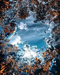 Геометрия Мальтийского креста